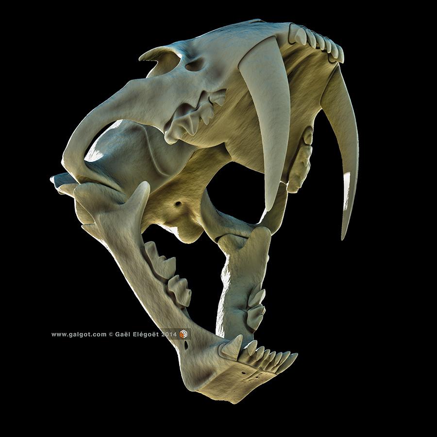 http://galgot.free.fr/Smilodon/Smilodon15-900x900.jpg