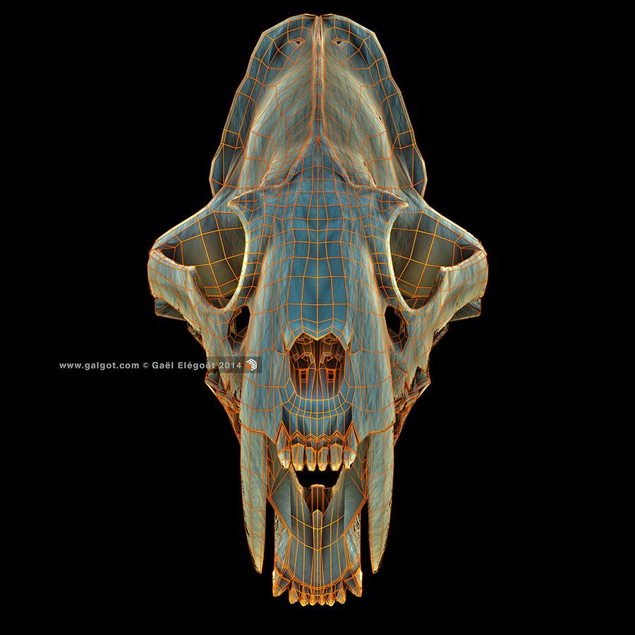 Smilodon14-900x900